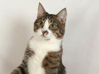 Найден кот Сева, который пропал на новгородском участке трассы М-11 ещё в июле