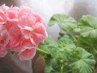 Семь растений, которые полезно разводить у себя дома