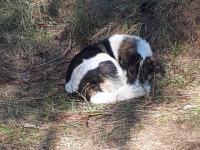 В боровичском лесу нашли собаку, которой жестокий хозяин приказал сидеть и ушел навсегда