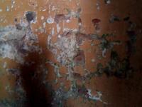 В доме с шершнями на Береговой можно снимать ужастик