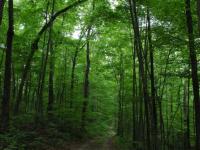 Еще одна женщина вышла из новгородского леса