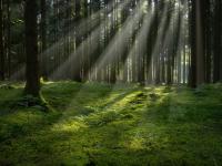 В Новгородской области заблудившаяся в лесу женщина нашла дорогу домой