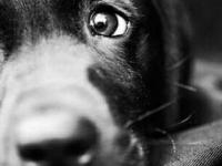 В одной из деревень Новгородской области хозяева привязали в лесу собаку к дереву и ушли