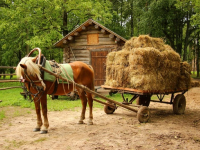 В «Витославлицах» новгородцев снова научат ухаживать за конем