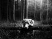 Верный пес охранял хозяина даже после внезапной смерти в пестовском лесу