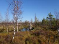 Более 60 километров прошли ученые в Рдейском заповеднике в поисках тетеревов