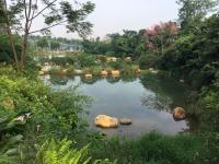Китайский дневник новгородца: голодные рыбы в пруду у горы Цинсю