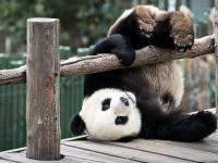 Китайский дневник новгородца: почему в Сычуани не только панды?