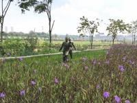 Китайский дневник новгородца: сад на зловонной реке
