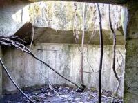 Мужчина из Чудовского района нашел в лесу базу аннунаков с планеты Нибиру