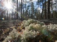 Новгородцы могут выиграть деньги за дизайн маршрута «Большой Валдайской тропы»