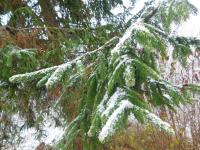 Первый снег выпал в Новгородской области и остался на фото