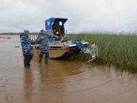 Покос на Ильмене: впервые за долгие годы на озере стали проводить рыбохозяйственную мелиорацию