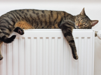 Прокуратура Великого Новгорода проведет горячую линию по вопросам отопления