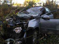 В Новгородской области еще один автолюбитель погиб из-за лося