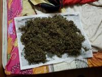 В парфинских лесах драгдилеры выращивали марихуану