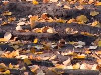 В Великом Новгороде найдена древняя мостовая, которую спрячут в приложение