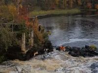 Видео: в Карелии добрые люди спасают собаку от гибели в водопаде