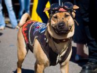 Завтра в Великом Новгороде прозвучит «Рок в защиту животных»