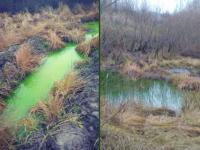 «53 новости» выяснили, ядовита ли странно-зеленая вода в одном из прудов Великого Новгорода