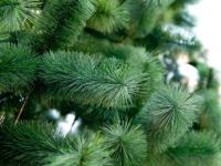 С понедельника на глазах новгородцев начнет «расти» новогодняя ель