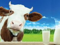 Специалисты со всей России приедут в Великий Новгород обсуждать молочные темы. И лён в придачу