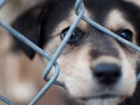 Тролли травят девушку из Майкопа, которая подарила 340 000 рублей приюту для кошек и собак
