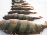 В Ильмене стало меньше рыбы на пять миллионов рублей