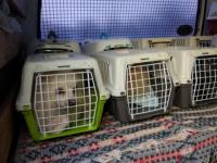 Мурманчанка держала в квартире 82 померанских шпица, пока собак не арестовали приставы