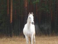 В Пестове лошадь выйдет на тропу войны с мусором