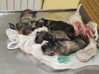 В Великом Новгороде семь маленьких щенят безжалостно оставили замерзать в мусорном контейнере