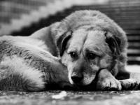 Живодер из Новгородского района легко отделался за кошмарные издевательства над собакой