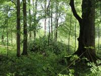 Эксперты дали прогноз состояния новгородского и псковского лесов на 2019 год