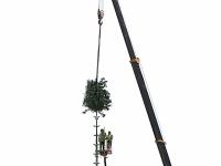 Фотофакт: в Новгороде ставят елку