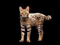 Главный Цветочный кот Ботанического сада МГУ впервые ждёт в гости экзотических собратьев