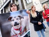Как новый закон защитит животных и людей?