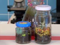 Новгородские школьники смогут заниматься в новом «Биоквантуме» совершенно бесплатно