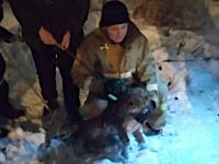 Почти Рождественское чудо: новгородские волонтеры и сотрудники МЧС спасли собаку, пять суток просидевшую в люке