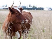 Семья из Омска открыла молочную ферму на Новгородчине