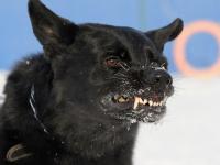 В Великом Новгороде ребенка покусала собака прямо на детской площадке