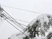 1500 жителей Новгородской области остались без электроэнергии из-за снегопада