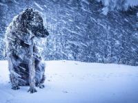 МЧС и синоптики предупреждают жителей Новгородской области об усилении ветра