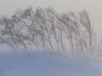 МЧС предупреждает новгородцев об очень крепком ветре