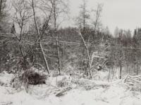 МЧС: в Новгородской области снегопад лишил света 216 деревень