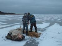 На новогодних каникулах в Новгородской области ловили ловцов рыб