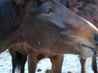 В Пестове пройдет «День морковки», где лошадки будут катать всех желающих за вкусняшки