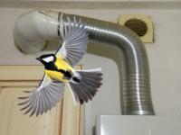 В Великом Новгороде маленькая птичка устроила погром в газовом хозяйстве
