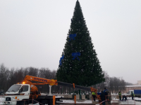 В Великом Новгороде раньше срока начали разбирать новогоднюю ель