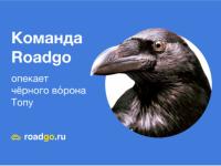 Знаменитый новгородский ворон Топа обрёл опекунов