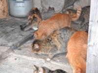Армии несчастных кошек из новгородской деревни помогает вся Россия